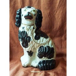 Black Patch Spaniel